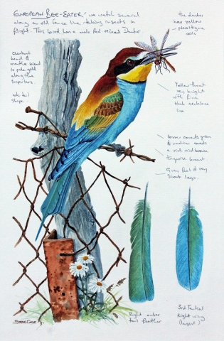 Bee-eater card