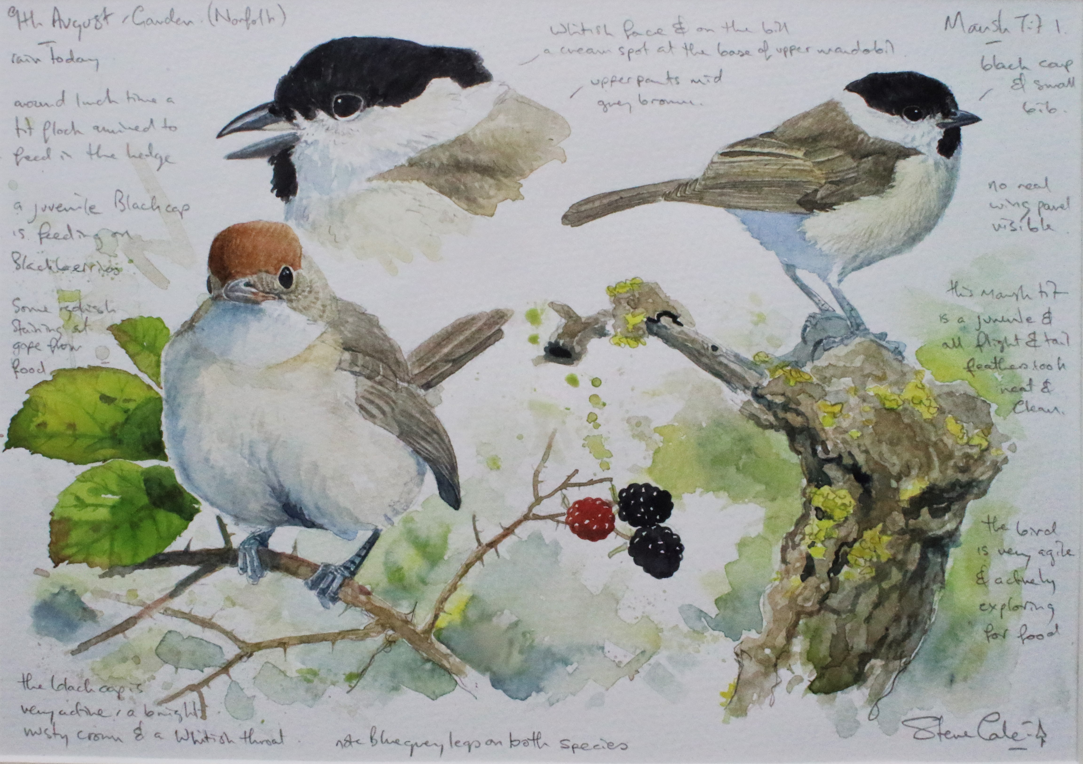 Marsh Tit and Blackcap card